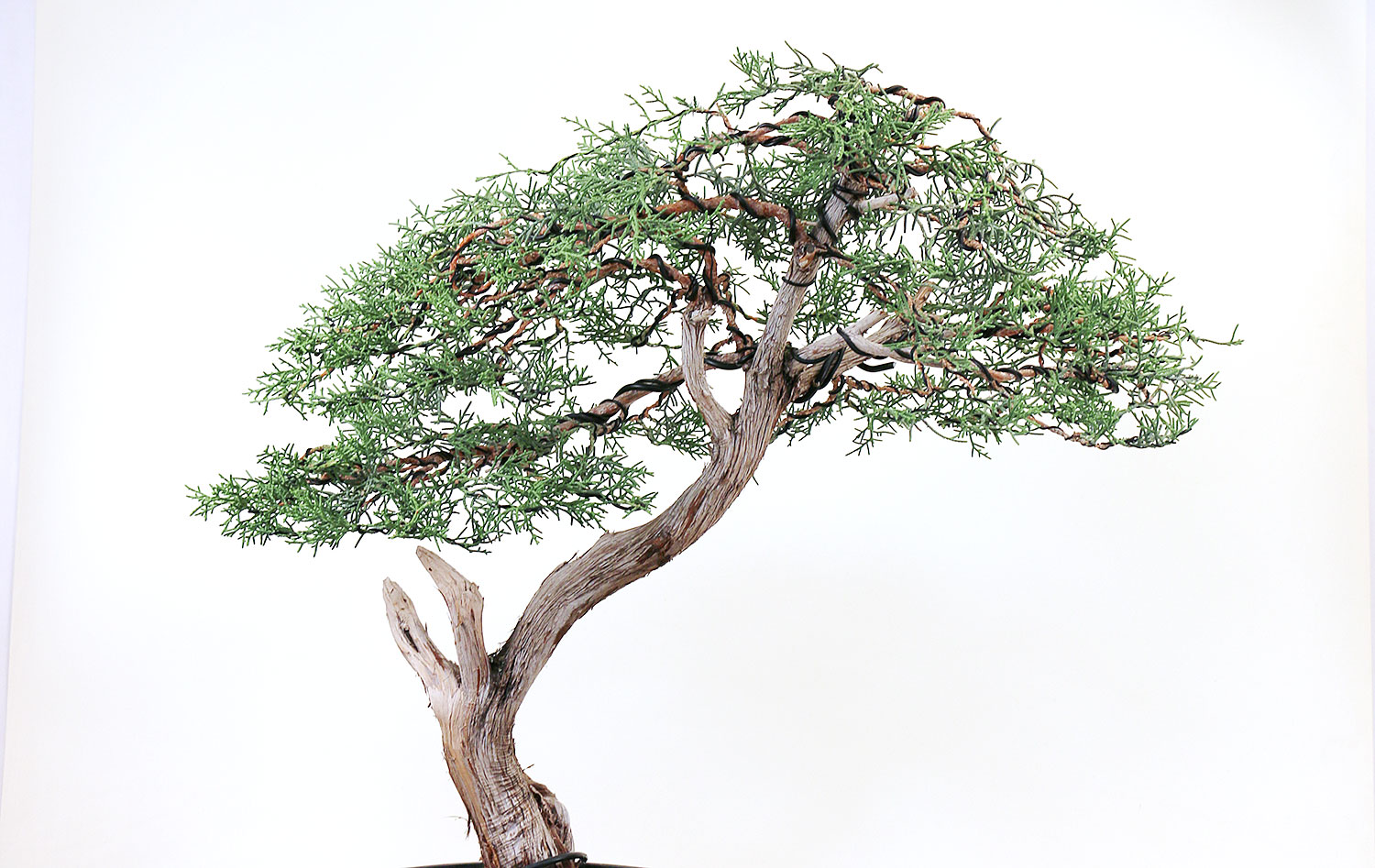 Home Eastern Leaf Knowledge Base Wiring Chinese Elm Bonsai Juniper Styling Tips Pinching Or Cutting Which Is Best