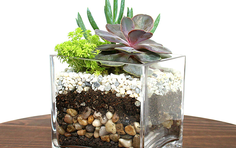 New Layered Succulent Terrariums Eastern Leaf Knowledge Base