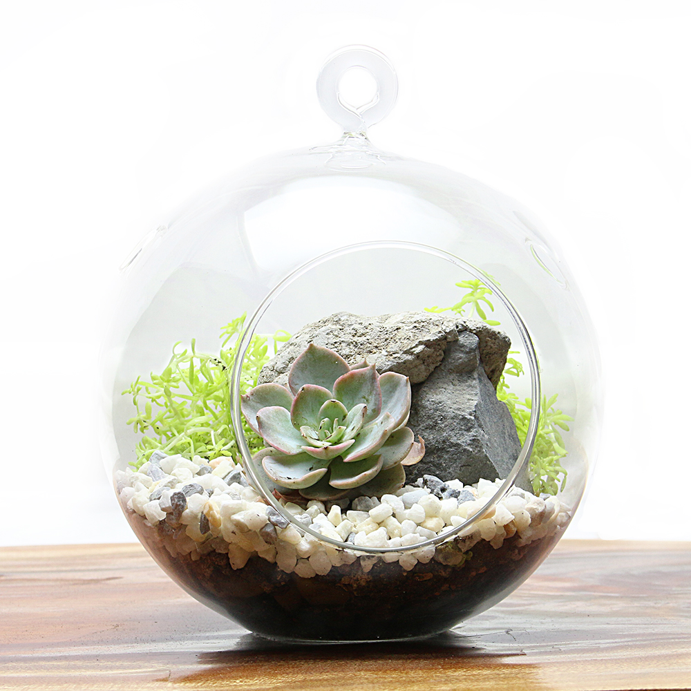 new layered succulent terrariums eastern leaf knowledge base. Black Bedroom Furniture Sets. Home Design Ideas