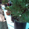 Benefits of Joining a Bonsai Club