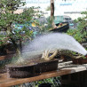 2 Watering Tips for your Bonsai Trees to Beat the Heat.